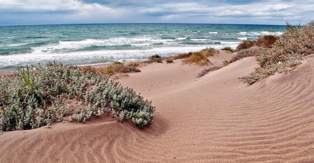 Artola Dunes