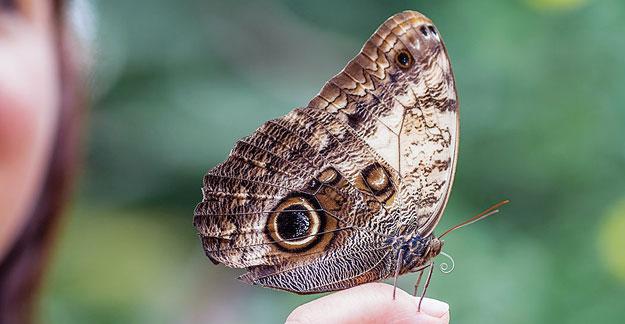 Schmetterlings-Park von Benalmádena